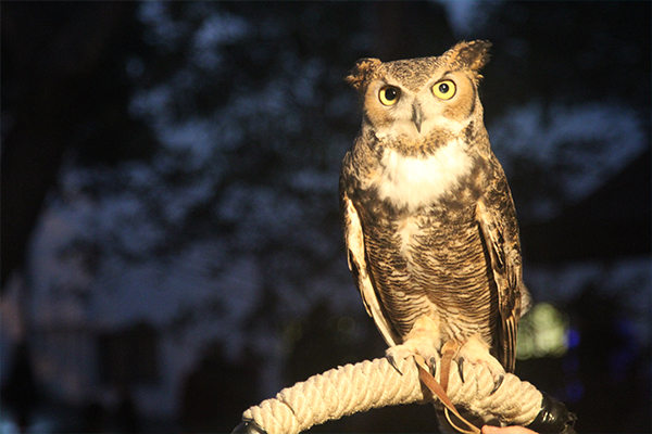 Twilight Adventures - Owl Prowl/Night Hike