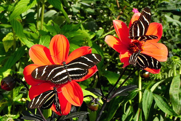 Backyard Science - Butterfly Gardens
