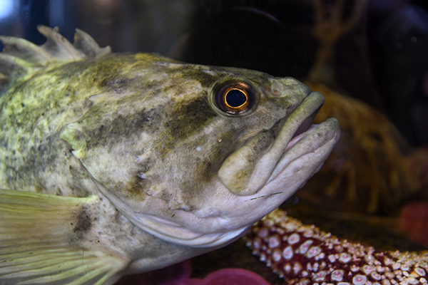 Marine Lab Wonders - A Fish is a Fish