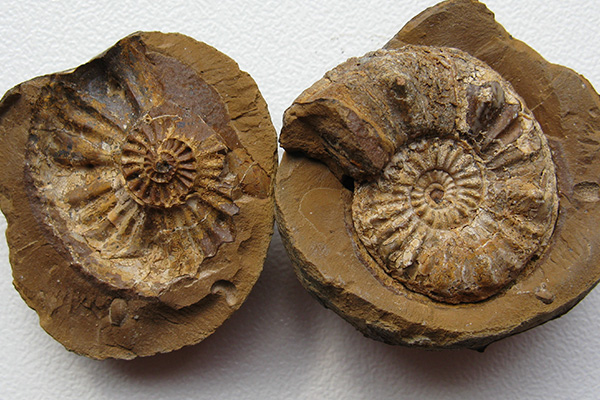 Be a Fossil Hunter